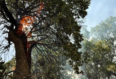 آتش در جنگل های بلوط زاگرس باز هم زبانه کشید