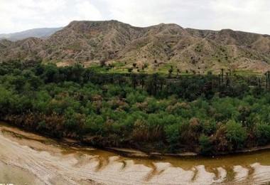 نابودی بزرگترین جنگل جنوب بوشهر